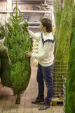 Young man choose Christmas tree in the market Royalty Free Stock Photo