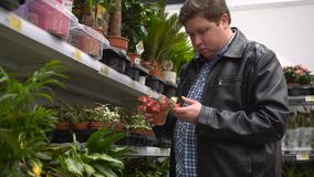 Young man choosing and shopping flowers in pot. Man in supermarket. The male in the shop. Buyer. Choose plants. Buy houseplants. Flower shop stock video footage