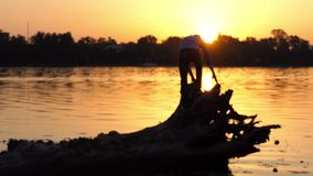 Young man climbs the tree roots on a lake bank in slo-mo. An arty view of a young man who climbs the tree roots on a forest lake bank at a splendid sunset in stock footage