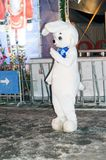 A young man in the costume of a white, fluffy hare stands near the New Year tree and entertains and photographs with visitors on t. He street. Russia vector illustration