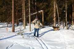 Young man cross-country skiing through the forest. Young man cross-country skiing on a sunny winter day through the damaged forest Royalty Free Stock Image