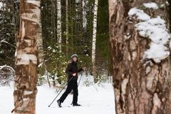 Young man cross-country skiing in the forest. Cross-country skiing: man cross-country skiing in the forest in winter Royalty Free Stock Images
