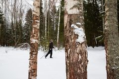 Young man cross-country skiing in the forest. Cross-country skiing: man cross-country skiing in the forest in winter Royalty Free Stock Image