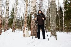 Young man cross-country skiing in the forest with White dog. Young man cross-country skiing in the forest with White Swiss shepherd dog Royalty Free Stock Photos