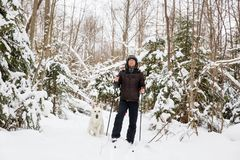 Young man cross-country skiing in the forest with White dog. Young man cross-country skiing in the forest with White Swiss shepherd dog Royalty Free Stock Image