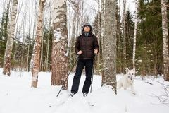 Young man cross-country skiing in the forest with White dog. Young man cross-country skiing in the forest with White Swiss shepherd dog Royalty Free Stock Photography