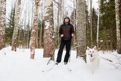 Young man cross-country skiing in the forest with White dog. Young man cross-country skiing in the forest with White Swiss shepherd dog Stock Photos