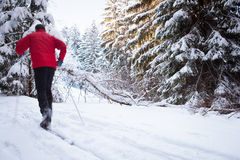 Young man cross-country skiing on a lovely winter day Royalty Free Stock Image