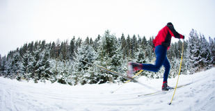 Young man cross-country skiing on a snowy forest trail Royalty Free Stock Image