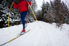 Young man cross-country skiing on a snowy forest trail Royalty Free Stock Photos