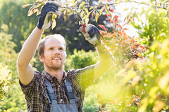 Young man cutting branch in garden Stock Image