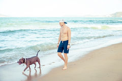 Young man with dog american pit bull terrier walking on the tropical beach. Man and dog strolling on seaside in the morning stock images
