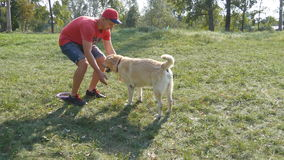 Young man and dog playing outdoor at nature. Labrador or golden retriever and his male owner spend time together at the stock video
