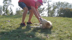 Young man and dog playing outdoor at nature. Labrador or golden retriever and his male owner spend time together at the stock footage