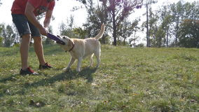 Young man and dog playing outdoor at nature. Labrador or golden retriever and his male owner spend time together at the stock video footage