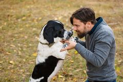 Young man with dog walks in autumn park. He holds paw of pet. Dog is hunting, short-footed, lop-eared and spotty royalty free stock images