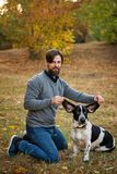 Young man with dog walks in autumn park. He straightened big ears of his pet. Dog is hunting, short-footed, lop-eared and spotty royalty free stock image