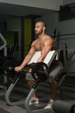 Young Man Doing Exercise For Biceps. Muscular Young Man Doing Heavy Weight Exercise For Biceps In Gym royalty free stock image