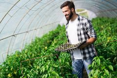 Young man doing plant work in hothouse Stock Photo