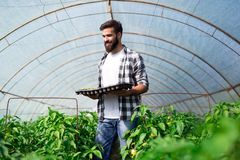 Young man doing plant work in hothouse Stock Image
