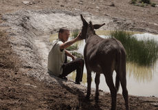 Young man and donkey Royalty Free Stock Images