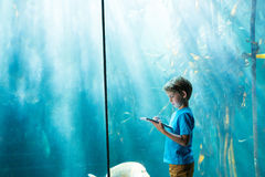 Young man drawing a fish in a tank Royalty Free Stock Images