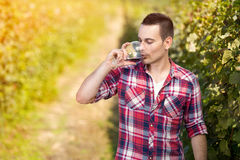 Young man drinking wine in vineyard. Young man enjoying a glass of wine in the vineyard Stock Image