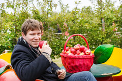 Young man eating red apples in an orchard Royalty Free Stock Image