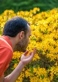 A young man enjoying the aroma of spring blossom of bright yellow rhododenrons. Selective focus. royalty free stock photos