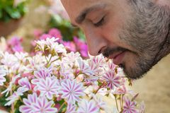 A young man enjoying the aroma of spring blossom pink flowers. S. Elective focus stock image