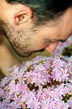 A young man enjoying the aroma of spring blossom pink flowers. S. Elective focus stock photo
