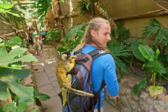 Young man is explored by a cute little monkey Stock Images
