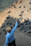 The young man feed pigeons on ground besides of river royalty free stock photos