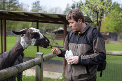 Young man feeding animals in zoo Stock Photos