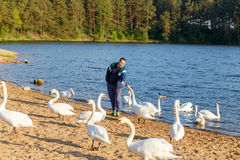 Young man feeding a white swan. At the lake Royalty Free Stock Photo