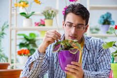 The young man florist working in a flower shop. Young man florist working in a flower shop Royalty Free Stock Image