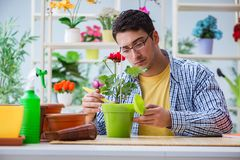 The young man florist working in a flower shop. Young man florist working in a flower shop Stock Photography