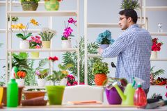 The young man florist working in a flower shop. Young man florist working in a flower shop Royalty Free Stock Photo