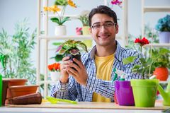 The young man florist working in a flower shop. Young man florist working in a flower shop Stock Images