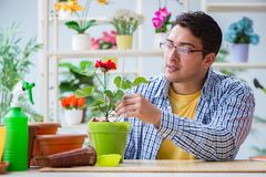 The young man florist working in a flower shop. Young man florist working in a flower shop Royalty Free Stock Images