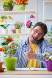 The young man florist working in a flower shop Royalty Free Stock Image