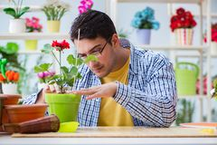 The young man florist working in a flower shop. Young man florist working in a flower shop Stock Photos