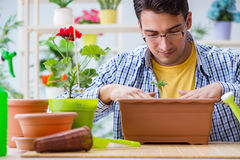 The young man florist working in a flower shop Stock Photos