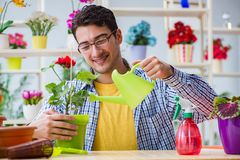 The young man florist working in a flower shop. Young man florist working in a flower shop Stock Image