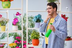 The young man florist working in a flower shop. Young man florist working in a flower shop Royalty Free Stock Photos