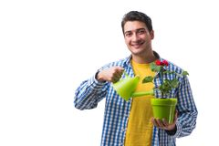 The young man with flower pot isolated on white. Young man with flower pot isolated on white Stock Photos