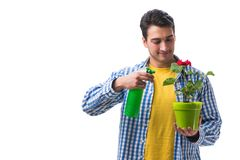 The young man with flower pot isolated on white Royalty Free Stock Photo