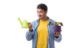The young man with flower pot isolated on white. Young man with flower pot isolated on white Royalty Free Stock Photography