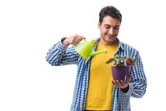 The young man with flower pot isolated on white. Young man with flower pot isolated on white Stock Images