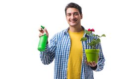 The young man with flower pot isolated on white. Young man with flower pot isolated on white Royalty Free Stock Photo
